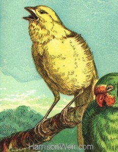 Detail: c1872 Canary and Lovebirds by Harrison Weir