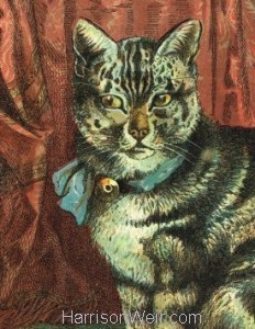 Detail: 1872 Circa THE CAT by Harrison Weir