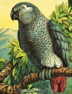Detail: 1872 Circa: The Parrots by Harrison Weir