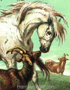 Detail: c.1872 The Pony and Goat by Harrison Weir