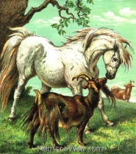 c. 1872: The Pony and Goat by Harrison Weir