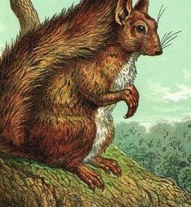 1872 The Squirrel by Harrison Weir