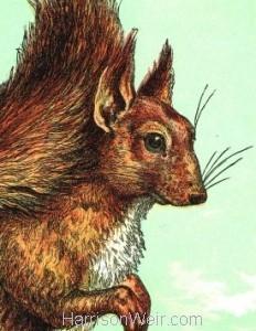 Detail: 1872 The Squirrel by Harrison Weir