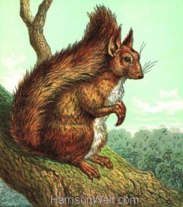 1861 The Squirrel, Full Page image by Harrison Weir