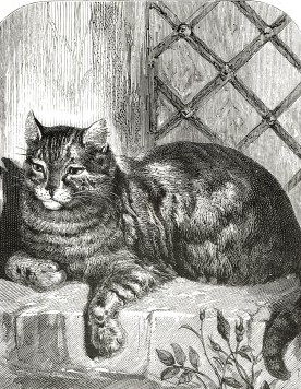 1863 Pretty Puss by Harrison Weir