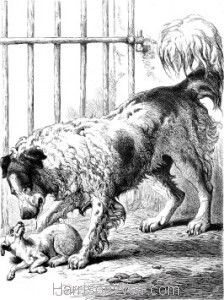1875 Newfoundland and Sick Dog by Harrison Weir