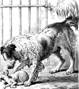 1875 Newfoundland and Sick Dog by Harrison Weir