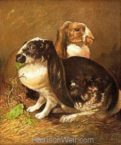 1877 Rabbits by Harrison Weir