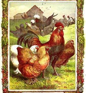 1870 In The Farmyard by Harrison Weir