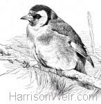 Vere Foster Copy Book O3 (Birds)